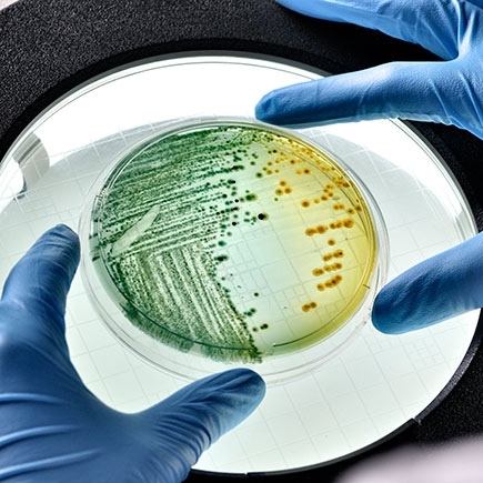 GLS Antimicrobial